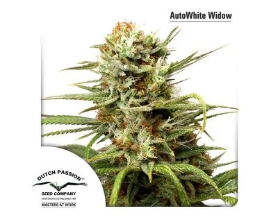 Auto White Widow (Dutch Passion) gefeminiseerd