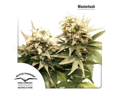 Masterkush (Dutch Passion) feminizadas