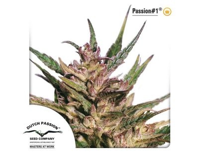Passion #1 (Dutch Passion) feminized