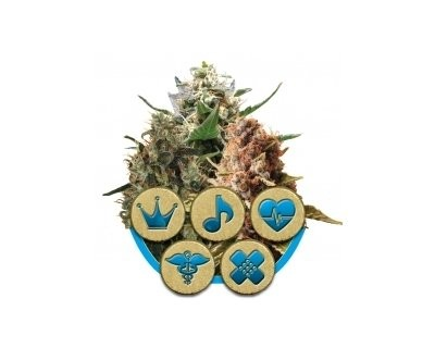 CBD Mix (Royal Queen Seeds) gefeminiseerd