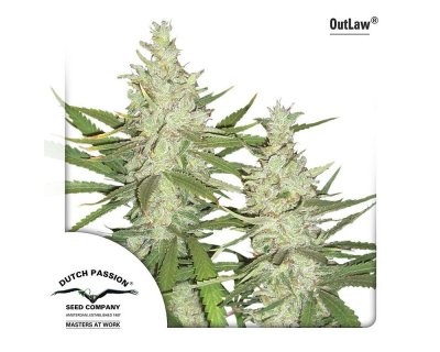 OutLaw (Dutch Passion) feminized