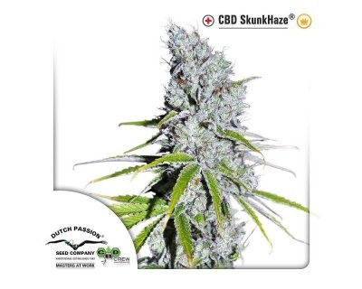 CBD SkunkHaze (Dutch Passion) feminisiert