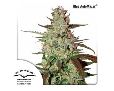 Blue Auto Mazar (Dutch Passion) femminizzato