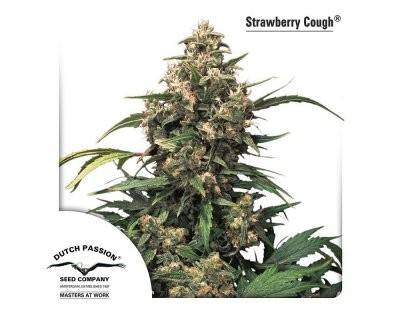 Strawberry Cough (Dutch Passion) femminizzato