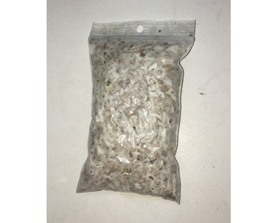 Psilocybe azurescens spawn bag